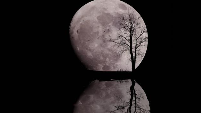 stor måne med ensam träd i stjärnklar natthimmel - halloween background bildbanksvideor och videomaterial från bakom kulisserna