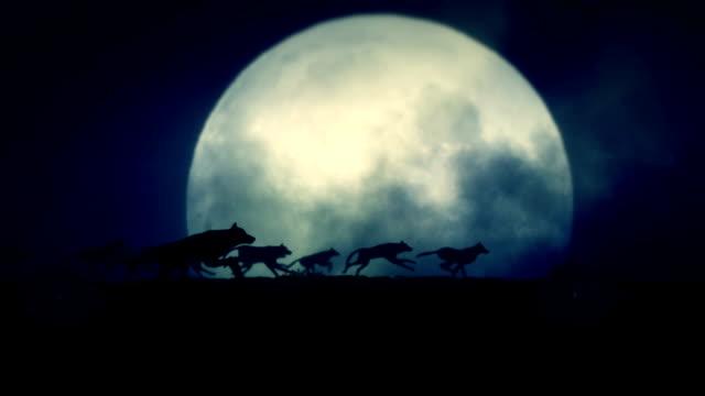vídeos de stock e filmes b-roll de big pack of wolves running on a full moon night - coiote