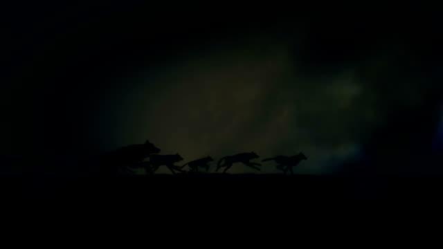 vídeos de stock e filmes b-roll de big pack of wolves running through a lightning storm - coiote