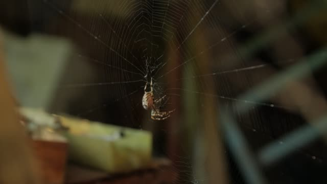 A Big Spider On The Web