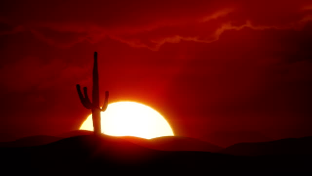 Big sunrise over desert with silhouette of cactus