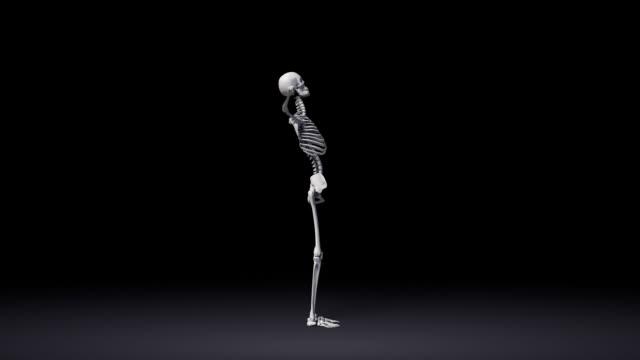Big Toe Pose Of Human Skeletal video