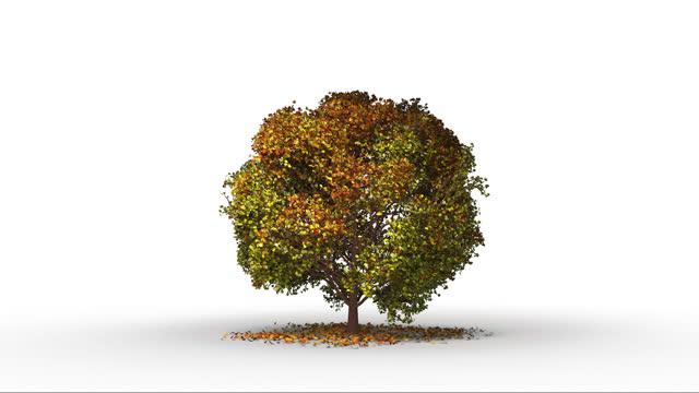 大樹和風的視覺效果。 - four seasons 個影片檔及 b 捲影像