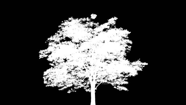 Big tree growth over time. 4K