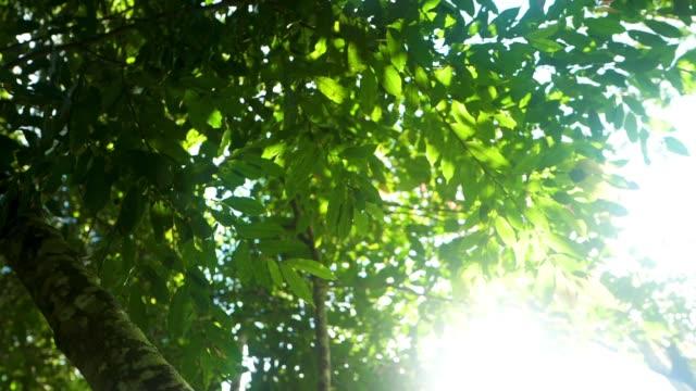 Big tree nature – film