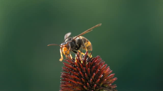 stora geting bålgeting start - bi insekt bildbanksvideor och videomaterial från bakom kulisserna