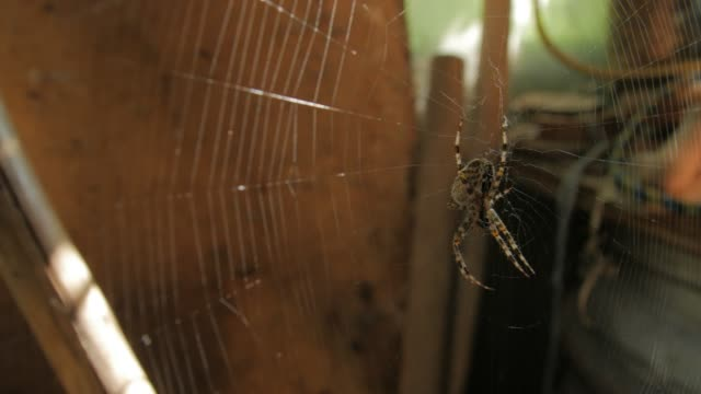 Big Web And Spider Eat