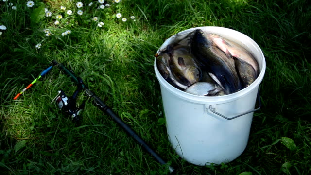 big white bucket many fish the rod lying in the grass video