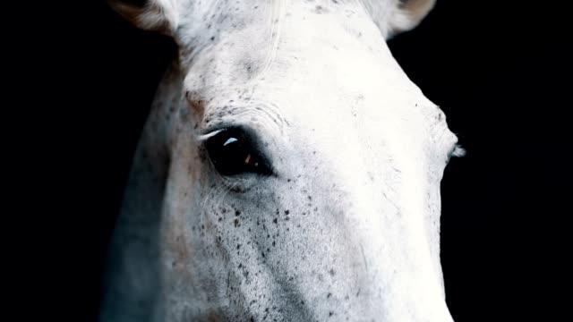 big white horse eating in a barn - cavalla video stock e b–roll