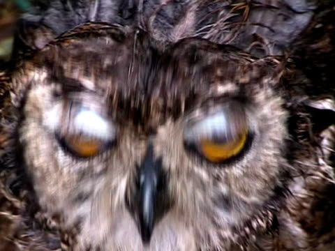 Big Yellow Owl Eyes video