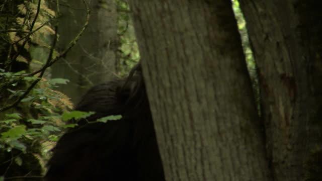 pic-nic bigfoot - yeti video stock e b–roll