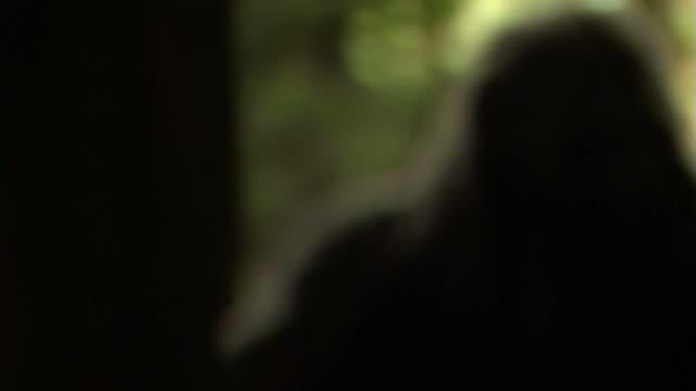 bigfoot sighting - intoning bildbanksvideor och videomaterial från bakom kulisserna