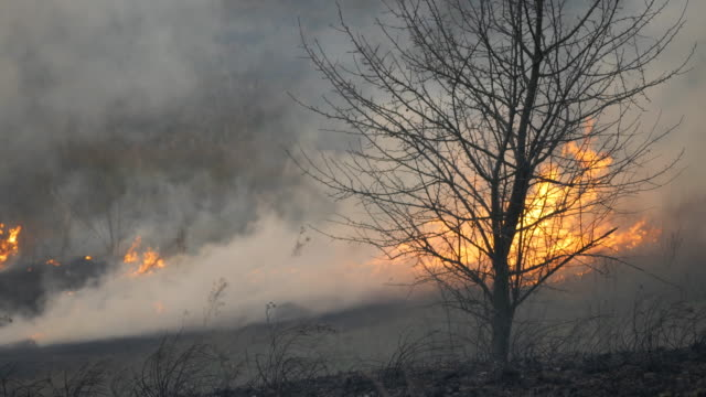 Bigger fire in the open air, a lot of smoke from burning trees, grass, bushes and reeds Bigger fire in the open air, a lot of smoke from burning trees, grass, bushes and reeds. swamp stock videos & royalty-free footage