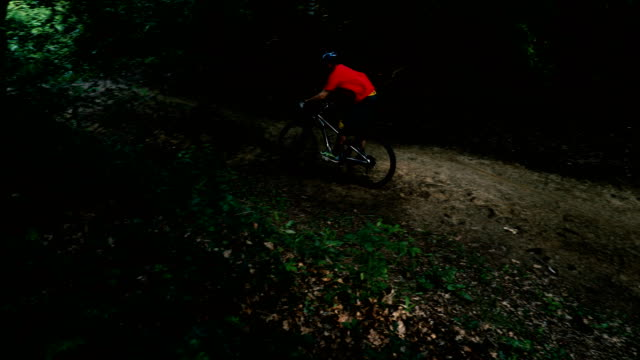 Bike ride in the forrest