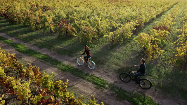 Biking in Napa Valley Vineyards A couple biking in Napa Valley Vineyards in the autumn. tripping falling stock videos & royalty-free footage