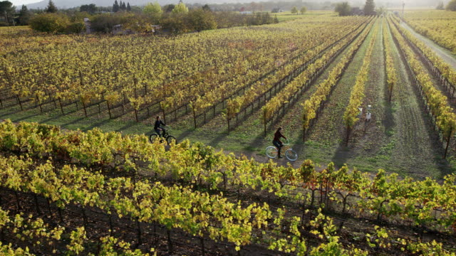Biking in Napa Valley Vineyards video