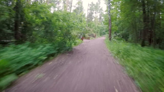 biking pov in the park after a violent storm - albero caduto video stock e b–roll