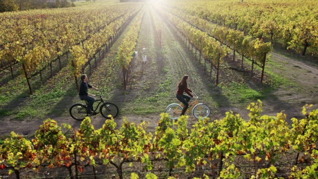 radfahren in den vineyards - erforschung stock-videos und b-roll-filmmaterial