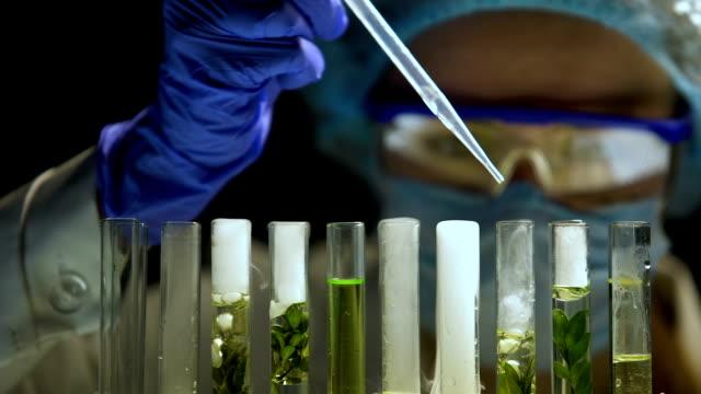 biokemist tillsats agent i rören med gröna växter kosmetologiprodukter forskning - kemikalier bildbanksvideor och videomaterial från bakom kulisserna