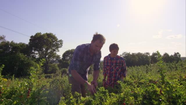 Biodynamic la agricultura - vídeo