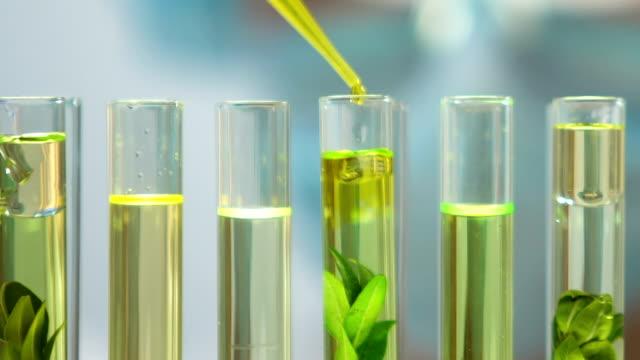 biologe fügt gelbe flüssigkeit zu pflanze in der röhre, menschliche auswirkungen auf die umwelt - kosmetik stock-videos und b-roll-filmmaterial