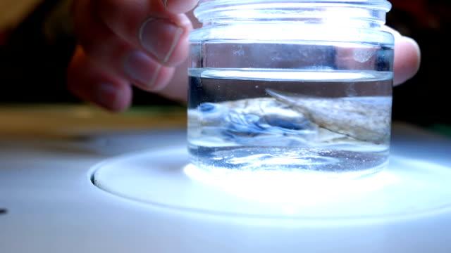 Biologist turns aquatic preserved specimen toward camera video