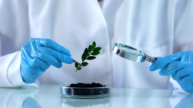 biologi forskaren kontroll grön växt med förstoringsglas, analys av jord - medicinskt stickprov bildbanksvideor och videomaterial från bakom kulisserna