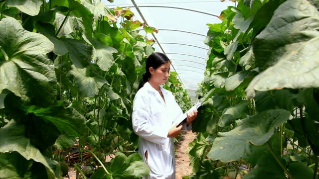 biotechnology woman engineer - ispettore della qualità video stock e b–roll