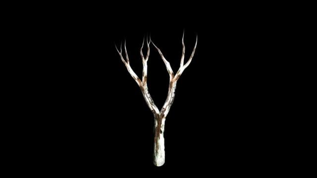 birch dead + alpha - gren plantdel bildbanksvideor och videomaterial från bakom kulisserna