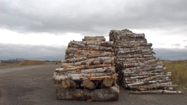 CLOSE UP: Birch tree trunks and cut logs lying in large woodpile at the roadside video