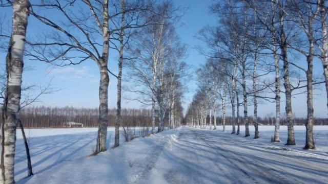 白樺並木、北海道、日本 - 冬点の映像素材/bロール