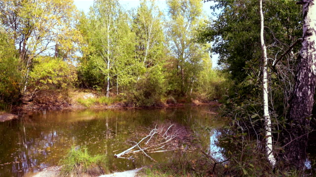 Birch Trees Over The Lake on a Sunny Autumn Day video
