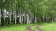 istock Birch. 472726901