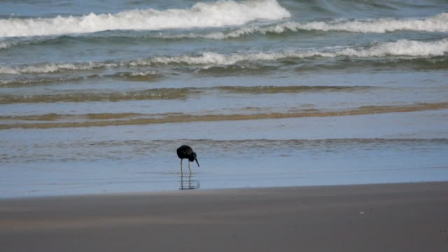 Bird and beach on shore with a fish
