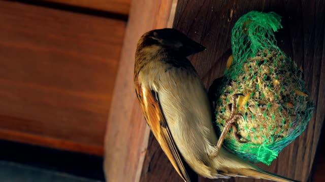 Bird and Green Mesh Bird Feeder video