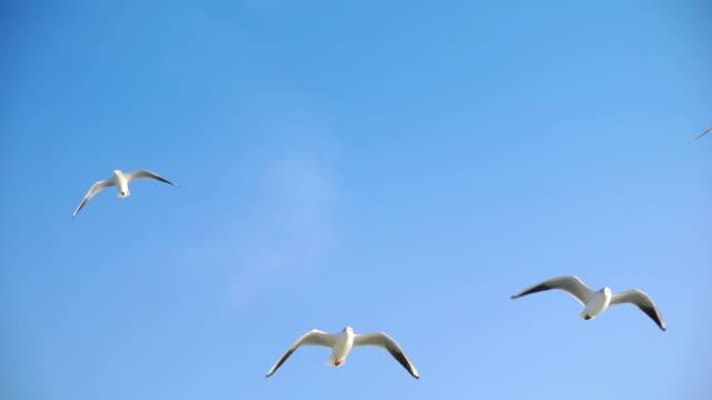 Bird Animal Seagulls Flying Bird Animal Seagulls Flying seagull stock videos & royalty-free footage
