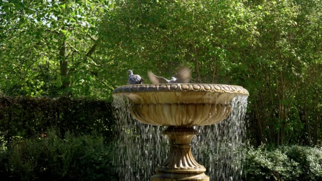 Bird Bath in London Regent's Park Avenue Gardens Real time shot made in 4K/Ultra High Definition ornamental garden stock videos & royalty-free footage