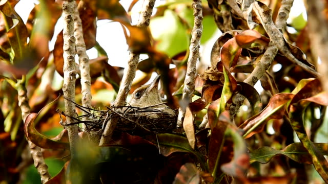 Bird brood video
