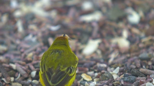 Bird eating video