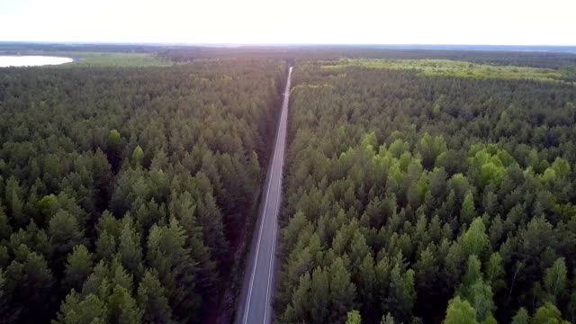 bird eye view long straight road crosses pine forest