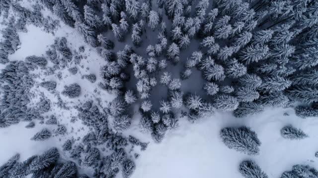 bird eye view - winter kiefernwald - italienischen alpen - schneeflocke sonnenaufgang stock-videos und b-roll-filmmaterial