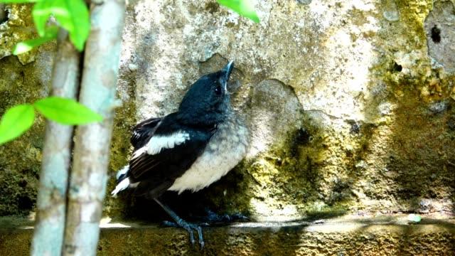 stockvideo's en b-roll-footage met vogel familie. - vrouwtjesdier