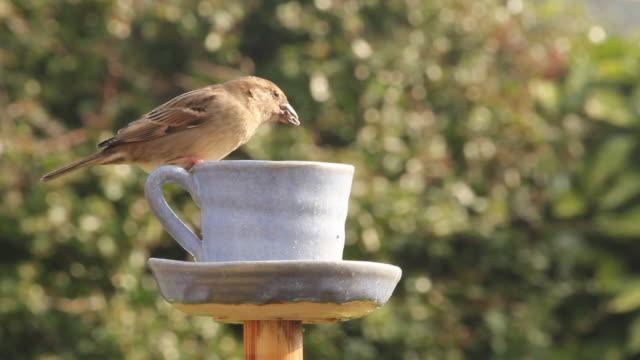 鳥の餌箱 - ソーサー点の映像素材/bロール