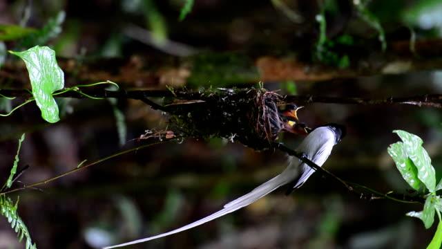生まれたばかりの雛の餌鳥 - ハエ点の映像素材/bロール
