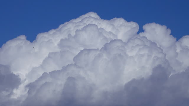 vídeos de stock, filmes e b-roll de pássaro voa na frente de nuvens cumulus - cúmulo