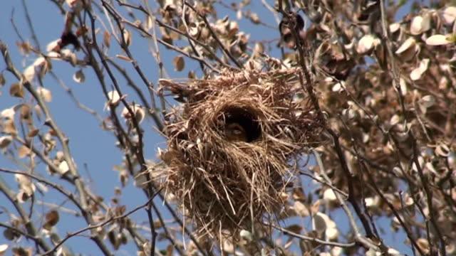 鳥が巣から飛び出す - ハエ点の映像素材/bロール