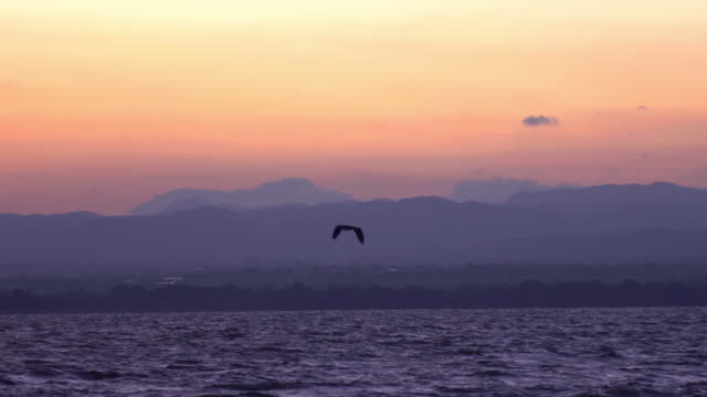 Bird flying in slow motion at sunset over the sea video
