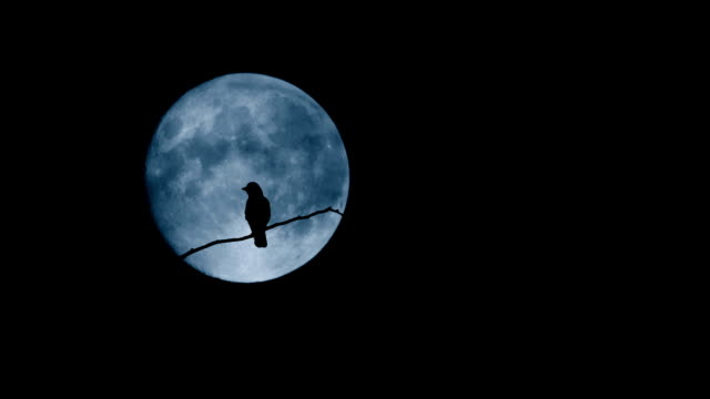 Bird Flying Off Branch In Front Of Large Moon Bird on the tree branch perching then flying away limb body part stock videos & royalty-free footage