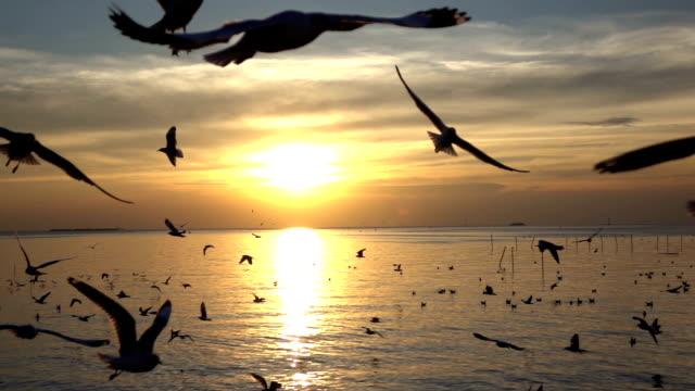 Bird flying on sky in sunset, slow motion shot