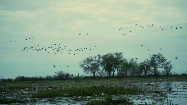 bird flying over the lake, animal in the wild, nature background , slow motion - svasso video stock e b–roll